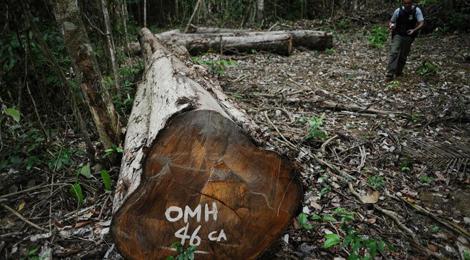 Politie houdt vier verdachten aan voor diefstal van houtblokken 1